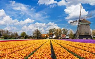 פסטיבלים של אביב באמסטרדם